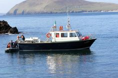 Dolphin and Whale Watching Tour from Dingle Dingle Bay Eco Tours is a 4 hour boat tour of the Blasket Islands and Dingle Bay with the opportunity to see whales, dolphins , seals, basking shark (in season), puffins and other marine wildlife and view the wonderful seascapes and landscapes off the west coast of Ireland along the Wild Atlantic Way. The tour is informal and casual with experienced skipper and crew and wildlife guide on board. The vessel has a flying bridge for wild...