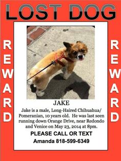 LA Please help bring Jake home by reporting this!!!!!!