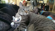 My Cat And His Cat. - http://cutecatshq.com/cats/my-cat-and-his-cat/
