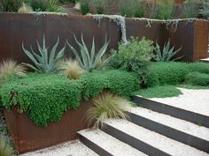 The stonecrop ground cover (Sedum reflexum 'Green Spruce') beautifully blankets the hard edges of the stone wall and flows easily down the f...
