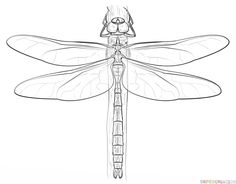 How to draw a dragonfly | Step by step Drawing tutorials