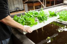 Indoor Farming: Future Takes Root In Abandoned Buildings, Warehouses, Empty Lots & High Rises