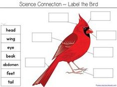 Counting is for the Birds Kindergarten Literature Unit Printables - 1+1+1=1: