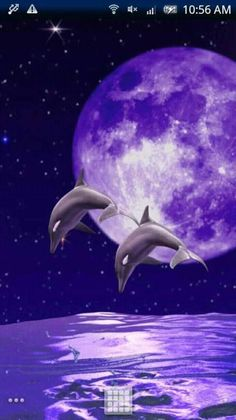 Dolphin Painting, Dolphin Art, Orca Art, Dolphin Images, Dolphins Tattoo, Baby Dolphins, Bottlenose Dolphin, Cute Animal Pictures, Ocean Pictures