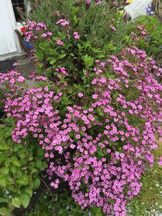 Greetings from my garden Margeritten 7/1/15 by Inger Johanne