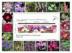 1. Anemone tomentosa 'Serenade' 2. Aster 'Treffpunkt' 3. Cornflower 'Jordy' 4. Bugbane 'Pink Spike' 5. Cruel Plant (Cynanchium ascyrifolium) 6. Strawberry Foxglove 7. Dropwort 'Plena' 8. Hellebore 9. Daylily 'Princess Blue Eyes' 10. Coral Bells 'Purple Palace' 11,12. Phlox 'Classic Cassis' & 'Herbstwalzer' 13. Salvia nemorosa 'Amethyst' 14. Menzies' Burnet (Sanguisorba menziesii) 15. Stobilanthes atropurpurea 16. Japanese Forest Grass  R1,2. Roses 'Blackberry Nip' & 'Galerie Troos'