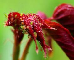 Htm, Gardening, Plants, Plant Decor, Home Remedies, Flowers, Garten, Flora, Plant