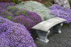 Aubrieta ground cover is not appreciated enough.