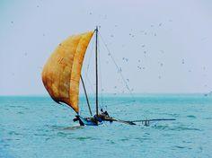 Negombo: nous arrivons sur l'île de Ceylon!  La poudre d'escampette - Blog de voyage - Tour du monde