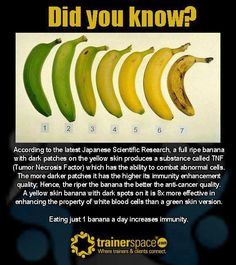 Wellthy Choices Network » Did you know – facts about bananas