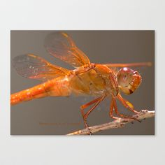 Red Dragonfly Stretched Canvas by Marisa Lopez-Cruzan - $85.00