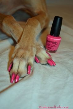 Pink Pedicure -- Tales and Tails