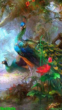 peacock animated gif