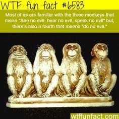 the three monkeys wtf fun facts - Funny Monkeys - Funny Monkeys meme - - WTF Facts : funny interesting & weird facts Creepy Facts, Wtf Fun Facts, Funny Facts, Funny Memes, Jokes, Random Facts, Random Stuff, Strange Facts, Funny Stuff