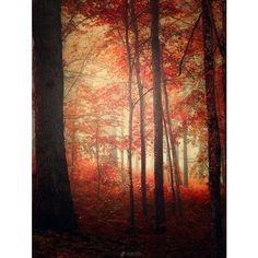 Fall in the Woods ❤ liked on Polyvore featuring backgrounds and pictures