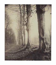 Saint Cloud (allée du parc), 1924, Eugene Atget. (1857 - 1927)