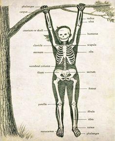 """Vintage Medical Illustration """"Skeleton Swing"""" Antique Anatomical Diagram - Children's Book"""