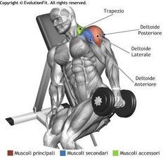 Muscle Building Tips. Fast Muscle Building Tips For Fitness Fanatics. Getting results from most things in life takes discipline, time and hard work. There is no difference with weight training. Lateral Raises, Workout For Flat Stomach, Baseball Training, Shoulder Workout, Bodybuilding Workouts, Muscle Fitness, Health Fitness, Weight Training, Body Training