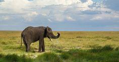 elephant water sprays 4k ultra hd wallpaper