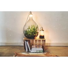 Plant lamps by Spruitje.
