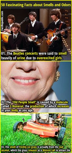 """1. The Beatles concerts were said to smell heavily of urine due to overexcited girls. 2. The """"Old People Smell"""" is caused by a molecule called 2-Nonenal, the production of which increases in your body as you age."""