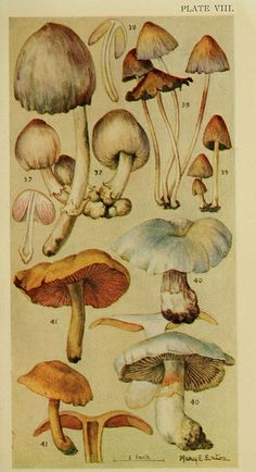 Field book of common gilled mushrooms New York :G.P. Putnam's Sons,1928. biodiversitylibrary.o rg/page/24373022