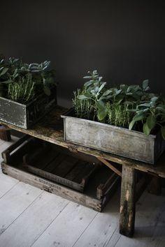 "I am a dreamer — floorabella: ""Little vegetable garden…"" Ivy Plants, Garden Plants, Indoor Plants, Balcony Gardening, Lawn And Garden, Herb Garden, Vegetable Garden, Garden Beds, Ivy House"