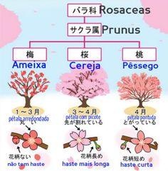 diferença_sakura_ume