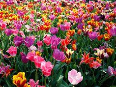 My Note Style: Primavera è voglia di cambiamento e di colori