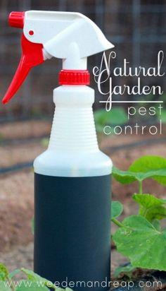 Natural Garden Pest Control - #DIY spray with essential oils.