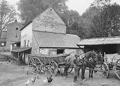 A Farm yard, Germantown, Pa. 1900 Photo