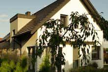 Dom w amarylisach Plants, Gardens, Plant, Planting, Planets