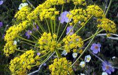Alternative, Herbs, Health, Food, Plants, Healthy Living, Health Care, Essen, Herb