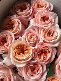 Rose - London Eye. Sold in bunches of 20 stems from the Flowermonger the wholesale floral home delivery service.