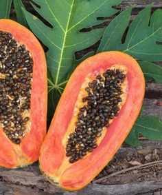 Papaya seeds can prevent and cure a plethora of ailments related to the liver, gut, worms and even diseases like Dengue. Read more on papaya seeds benefits.