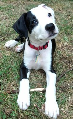 The Daily Puppy  ~  Ray the mixed breed.  Looks very similar to my Penny!