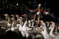 A man guides geese during the traditional Epiphany parade in central Madrid, Spain, January 5, 2015. REUTERS/Juan Medina