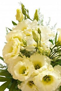 bouquet of beige lisianthus flowers Stock Photo My Flower, Fresh Flowers, Yellow Flowers, Pretty Flowers, Flower Power, Flower Ideas, Lisianthus Bouquet, Pastel Bouquet, Amazing Flowers