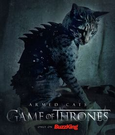 Armed Cats Game of Thrones