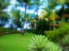 love for the green color Green Colors, Golf Courses, Reading, Books, Livros, Colors Of Green, Word Reading, The Reader, Livres