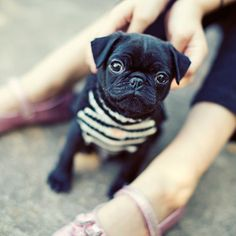 I don't want kids... I want a little black pug. :) :) :)