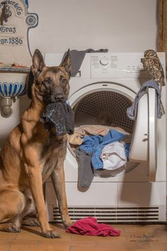 Dogs may be man's best friend, but Ingo the shepherd dog's special buddy is Poldi, a little owl who loves to pose for pictures and cozy up to his canine pal. Germany-based animal photographer and collage artist Tanja Brandt documents their unlikely friendship in heartwarming portraits that show the closeness of their bond. Whether the …