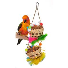 Asien 1Pc Coconut Shell Bird Nest Parrot Nesting Bird House Hanging Chain Cage Chew Toy