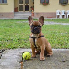 Sonny & his ball