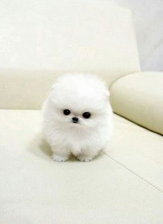 A fluffy pup