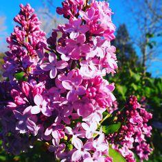 Beautiful. #flower #flowers #plants #botanical #thebotanicallife #spring
