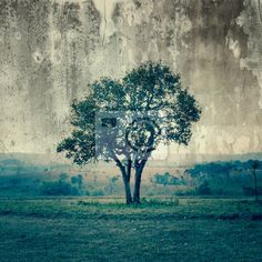 Wall Mural a single tree represent loneliness and sadness - tree • PIXERSIZE.com