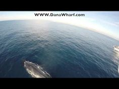 Questions the protection of the whales , are they being harassed by the drones?