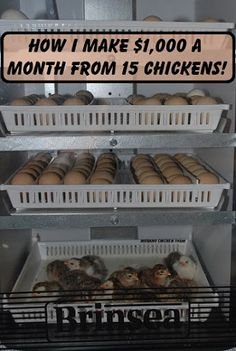 [CasaGiardino]  ♛  How I make $1,000 a month from 15 chickens!