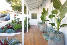 Sydney garden design, garden maintenance and horticultural services company Dream Garden, Home And Garden, House Front, Front Porch, Front Verandah, Front Deck, Front Doors, Sydney Gardens, Maple Shade
